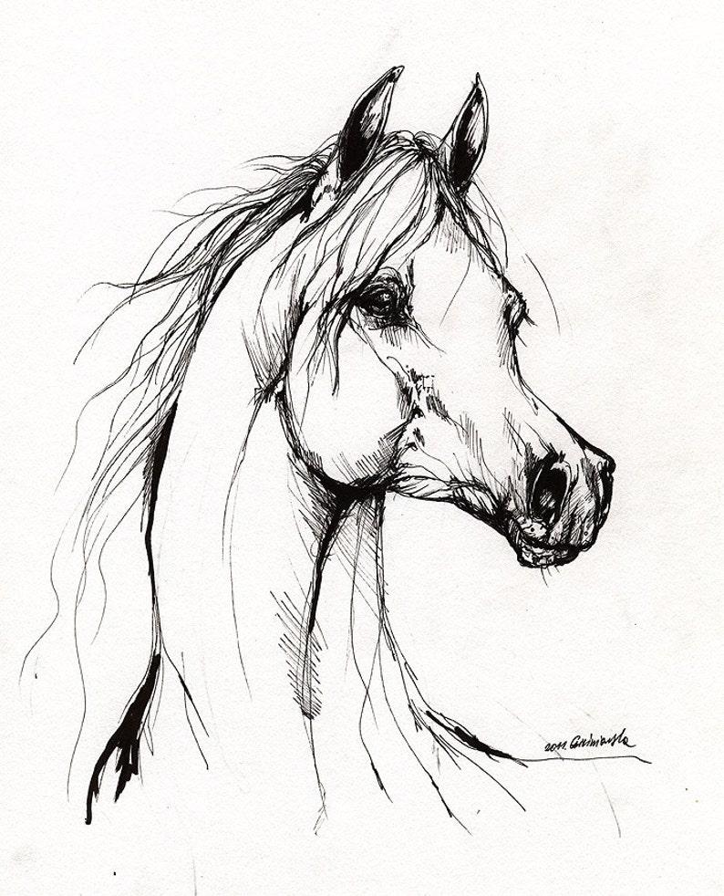 Arabian horse horse art equine equestrian portrait image 0