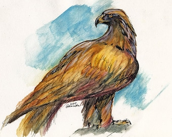 Original pen and watercolour pencil drawing of an eagle