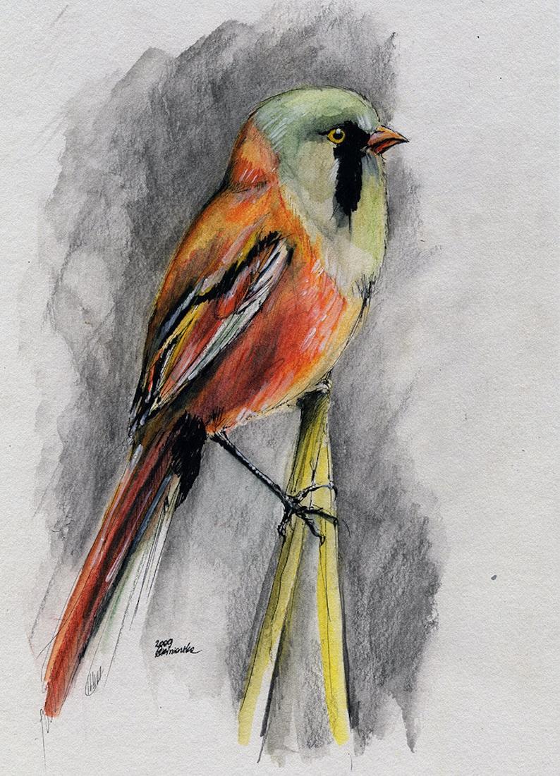 Wild bird portrait original ink and watercolor painting image 0