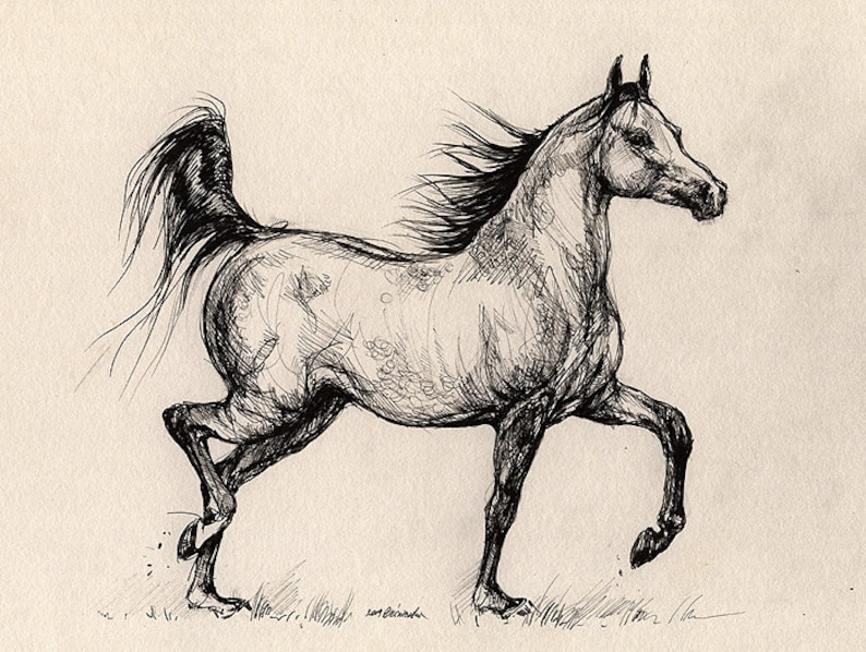 Running bay arabian mare horse portrait equine art image 0