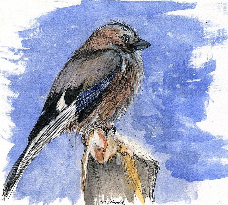 jay in a winter snow wildlife wild bird original pen and image 0