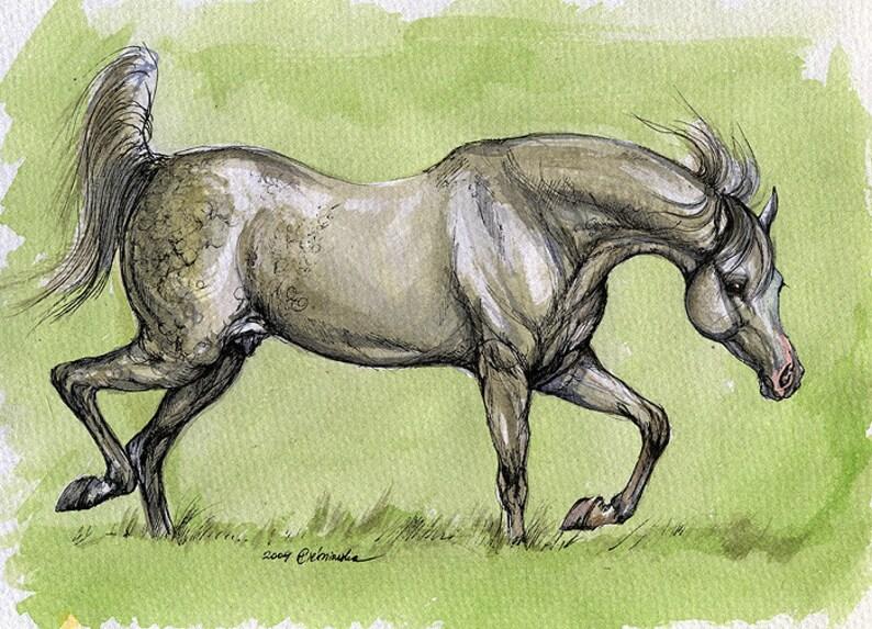 Kordelas grey arabian stallion equine art horse portrait image 0