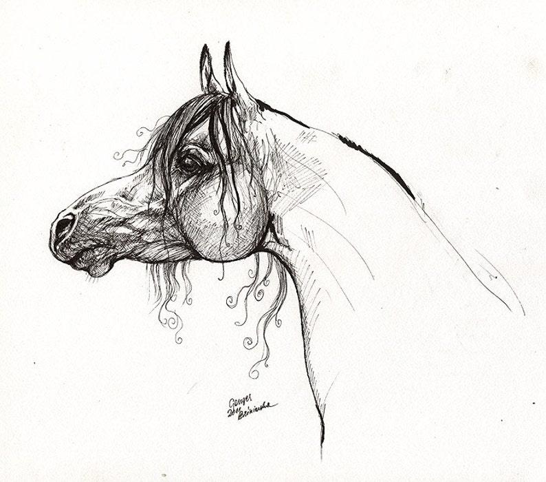 Arabian horse equine art horse portrait original pen image 0