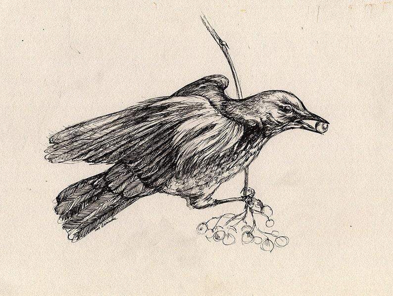 song thrush wildlife wild bird small bird original pen image 0