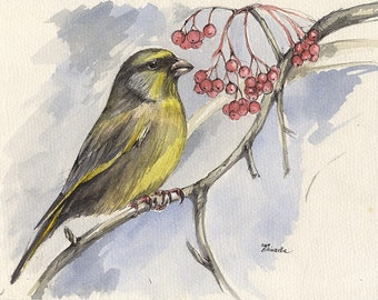goldfinch, finch, small bird, wildlife art, nature, original pen and watercolour painting
