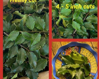 250 Fresh Holly Leaves  - Real Leaves - Holly - Incense - Crafts - DIY Rituals Crafts Home Protection Smudging
