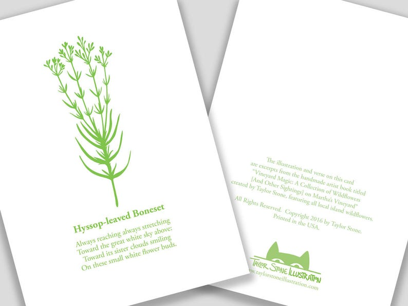 Hyssop-leaved Boneset Flower Card with Poem