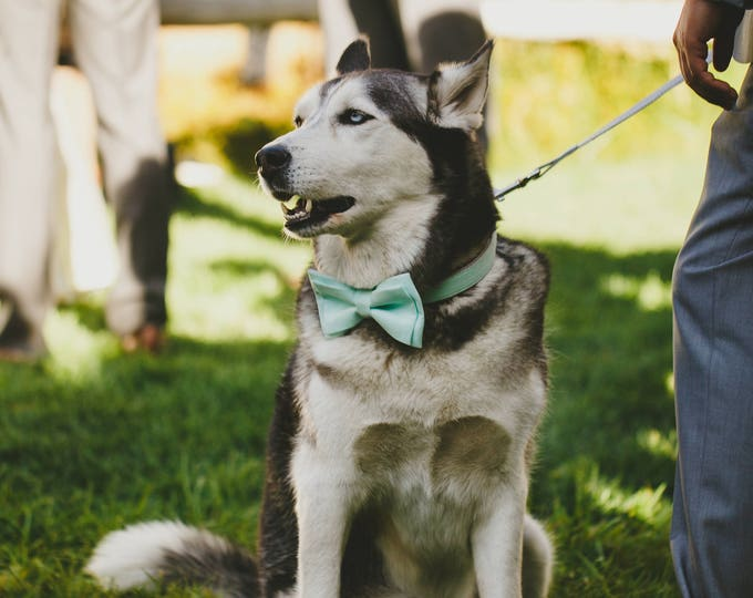 Pale Mint Dog Collar with Removable Layered Bow Tie by Poppy Parker Market