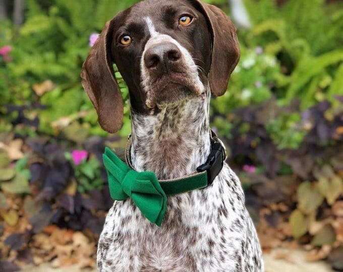 Christmas Green Fabric Dog Bow Tie on Collar With Leash - Ring Bearer