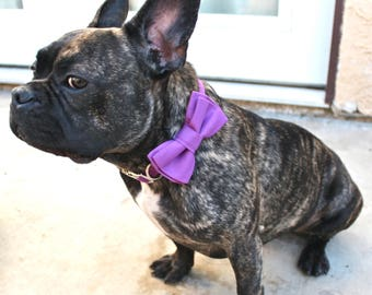 Purple Orchid Layered Dog Bow Tie Collar and Leash - Bright Purple - Dog of Honor - Ring Bearer