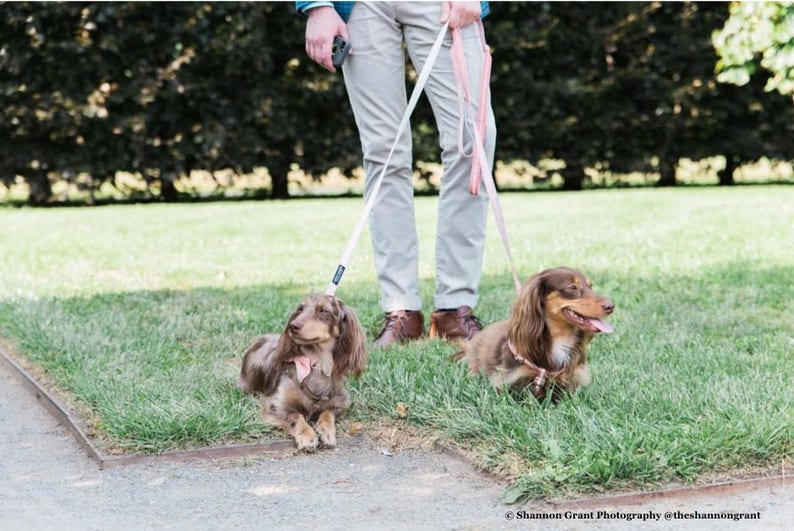 Dog Wedding Ring Bearer Bellini Optional Collar and Leash Peach Layered Dog Bow Tie
