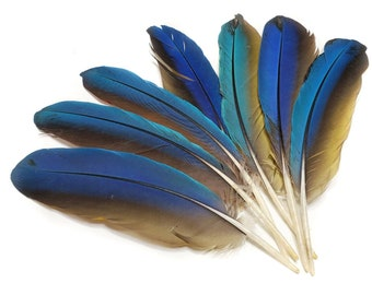 Amazon Parrot Lime green colored Tail Feathers natural colored,cruelty free collection of 6 feathers