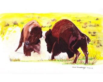 8 x 10 Print, hand drawn, Native American Art, Buffalo in Rut,  contemporary art, Native Design,