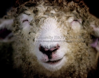 Smiling Sheep - 5x7 inch print in 8x10 matt board