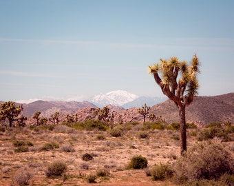 Desert photography, joshua tree, california photography, desert decor, desert wall art, southwestern decor, large wall art, desert art, boho