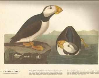 Original Vintage 1937 JohnJames Audubon Birds Of America Bookplate Print Bird 293 Horned Puffin 294 Pectoral Sandpiper