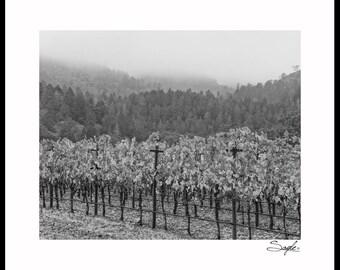 Napa Valley Vineyard Black and White 2 Fine Art Photograph, Wall Art, Home Decor, Gift, Misty Hills Vineyard Print, Vineyard Rows Photo