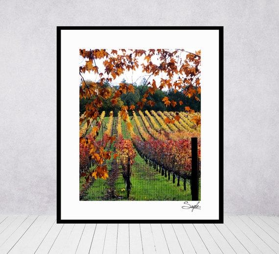 Napa Valley Fall Vineyard 37 Fine Art Photograph Wall Art Vineyard Image Wine Country Photo Photo Gift Fall Photo Home Decor Photo
