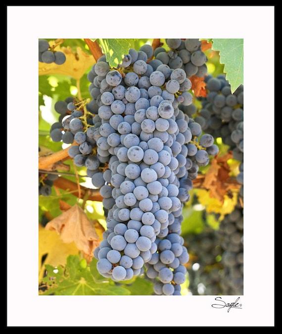"/""Cabernet Grapes/"" Napa Cal Art Photograph Signed 8 x 10"