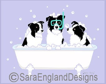 Spa Day - Border Collie