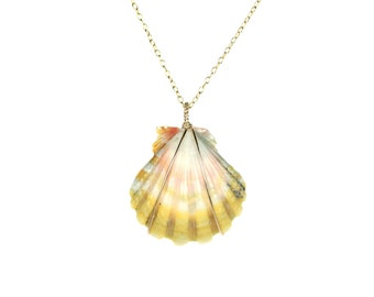 Sunrise shell necklace - Hawaiian shell - langfords pecten - sea shell necklace - a wire wrapped moonrise shell on a 14k gold vermeil chain