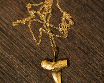 Shark tooth necklace - gold shark tooth necklace - a 22k gold plated sterling silver sharks tooth on a 14k gold vermeil chain