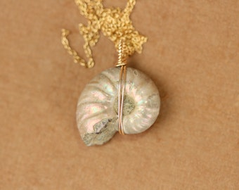 Ammonite necklace - opal necklace - shell necklace - fossil - an opalized ammonite wire wrapped onto a 14k gold vermeil chain