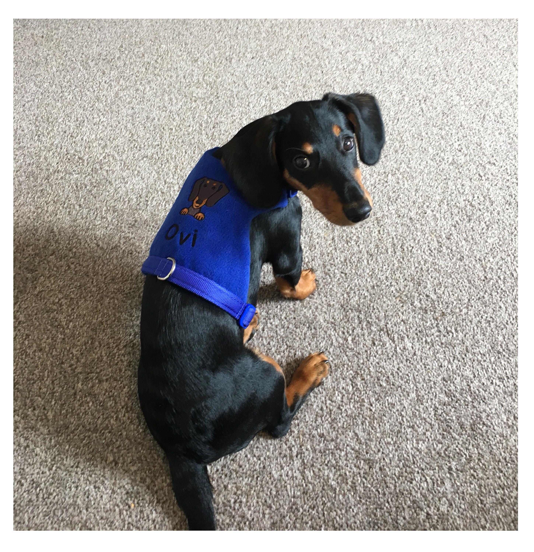Dackel Hundegeschirr personalisiert bestickte Fleece Weste