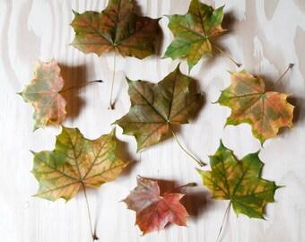Real Maple Leaf Etsy