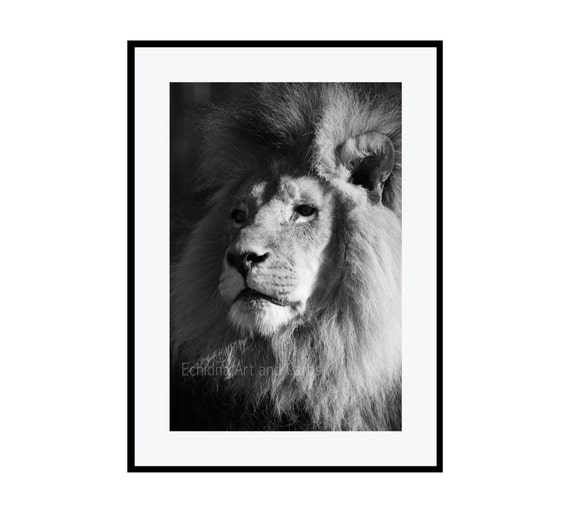 Black And White Lion Print Birthday Gift For Leo Man Living