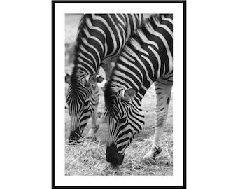 Zebra Wall Art, Black and White Animal Photography Print, Twins Nursery Decor, Zebra Gift