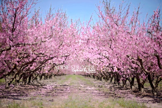 Peach blossom trees print spring flowers georgia south etsy image 0 mightylinksfo