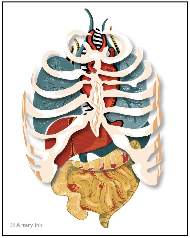 Vector Illustrated Ribcage Organs 8x10 Or 11x14 Print Etsy