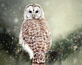 Barred Owl Photo, Wildfowl in the snow, Owl Photography, Wildlife Fine Art, Barred Owl Print, Bird Photo, Birds of Prey, Animal Print