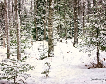 Trees in Snow Print, Snow Photography, Snow Pictures, Tree Wall Art, Winter Photo Art, Snow Tree Print, Snow Covered Trees, Upper Peninsula