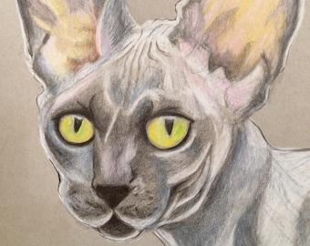 Sur mesure pour animaux de compagnie Portrait/Graphite ou crayon de couleur
