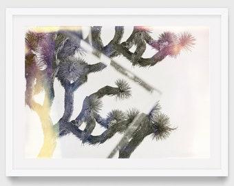 Joshua Tree Print - Original Photography - Abstract Nature Photography