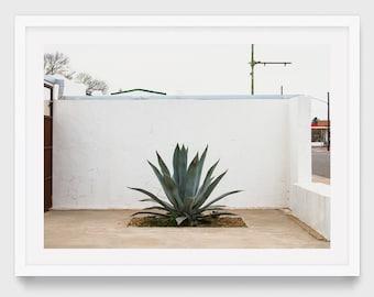 Marfa Texas Photography, Original Photography, West Texas Art, Succulent Print, Minimalist Botanical Wall Art, Calming Wall Art
