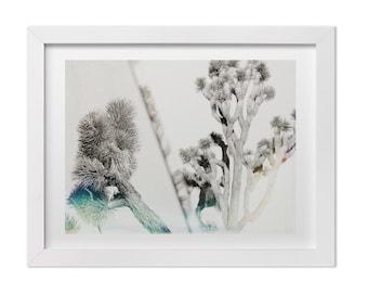 Joshua Tree Photography, Nature Photography, California Wall Art, Minimalist Contemporary Art Print, Light Leak Film Photography