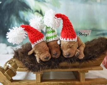 40a64dcd26955 Puppy Santa Hat