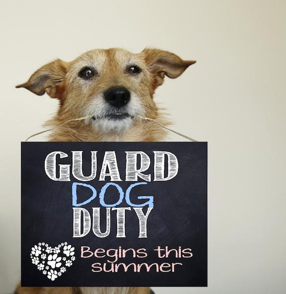 Dog Pregnancy Reveal Guard Dog Duty Announcement Pregnancy Announcement Printable