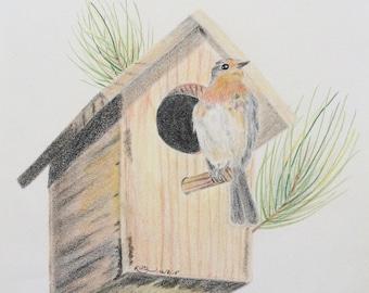 Original colored pencil drawing art bird birdhouse pine