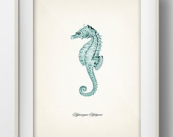 Blue Seahorse Print 1 - SH-06 - Fine art print of a vintage natural history antique illustration