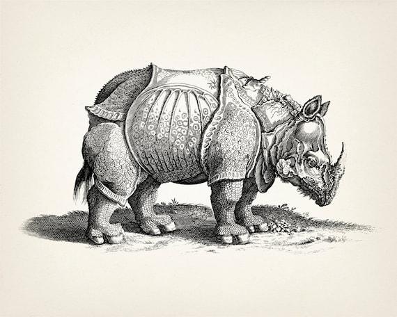 dürer rhinozeros