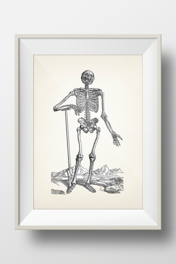 Skeleton Engraving 1 - Scientific Anatomy Drawing - OE-03 Fine art print of  a vintage natural history antique illustration