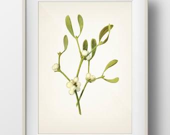 Mistletoe Plant Christmas Botanical Print - Holiday Wall Art - WITHOUT plant name on print - PL-05