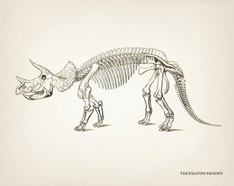 Triceratops Skeleton - DI-01 - Fine art print of a vintage natural history antique illustration - 8x10 11x14 12x18 13x19