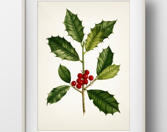 Holly Plant Christmas Botanical Print - Holiday Wall Art - WITHOUT plant name on print - PL-06