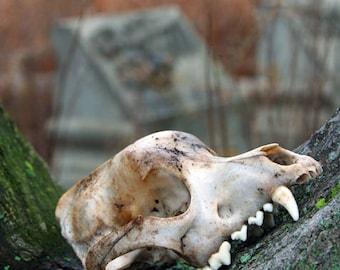Abandoned Skull