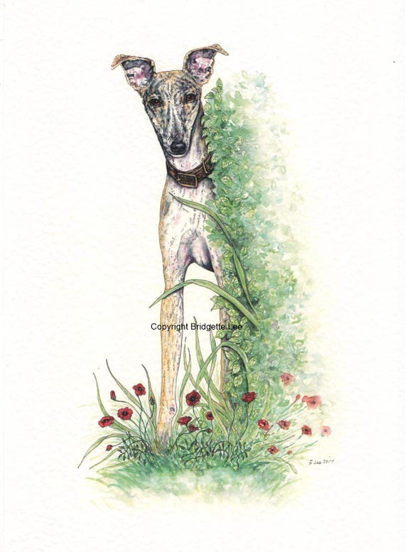 Un Cane Whippet Levriero INCHIOSTRO E ACQUERELLO dipinto di Bridgette Lee